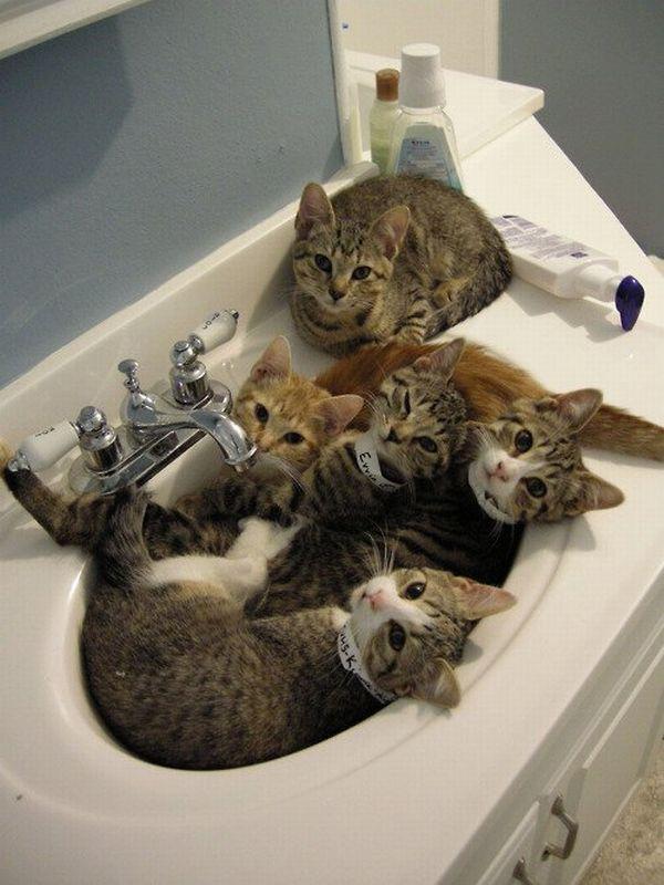 cats-in-bathroom-sink.jpg